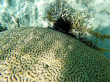 1123 Mauritius island - Ile Maurice 2014 - GOPR2956_DxO Pbase.jpg