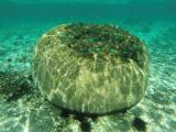 1126 Mauritius island - Ile Maurice 2014 - GOPR2959_DxO Pbase.jpg