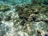 1149 Mauritius island - Ile Maurice 2014 - GOPR2992_DxO Pbase.jpg