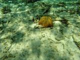 1163 Mauritius island - Ile Maurice 2014 - GOPR3006_DxO Pbase.jpg