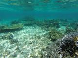 1166 Mauritius island - Ile Maurice 2014 - GOPR3009_DxO Pbase.jpg
