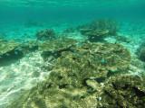 1172 Mauritius island - Ile Maurice 2014 - GOPR3015_DxO Pbase.jpg