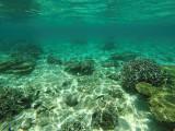 1174 Mauritius island - Ile Maurice 2014 - GOPR3017_DxO Pbase.jpg