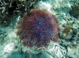 1184 Mauritius island - Ile Maurice 2014 - GOPR3028_DxO Pbase.jpg