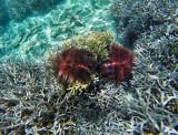 1195 Mauritius island - Ile Maurice 2014 - GOPR3039_DxO Pbase.jpg