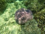 1212 Mauritius island - Ile Maurice 2014 - GOPR3056_DxO Pbase.jpg