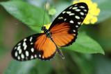 Visite de la serre aux papillons de la ville de Vannes