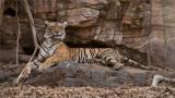 Tigeress Lightning in the Rocks
