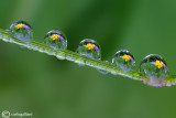 Spring in drops