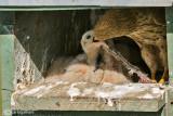 In the nest of Kestrel