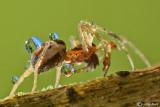 Spider & Refraction