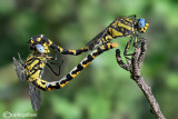 Insects in Love - Matings in insects