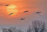 Tramonto con Ibis