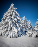 Mid-Winter in eastern and central Washington State 2015-2016
