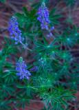 Flowers_003_MG_6650.jpg