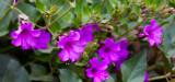 Flowers_006_MG_6907.jpg