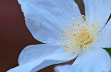 Flowers_017_Q8V0542.jpg