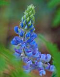 Flowers_026_Q8V1760.jpg