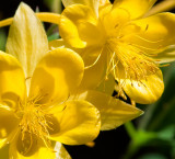 Flowers_030_013_MG_6816.jpg