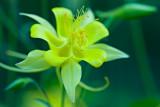 Flowers_035_Q8V1295.jpg