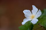 Flowers_043_Q8V0545.jpg