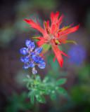 Flowers_046_Q8V5737.jpg