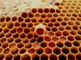Queen cup with pollen