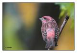 Oiseaux 2016 Birds