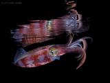 Squid Reflection