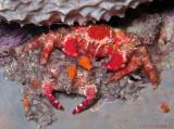 Crab & Molt
