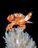 Crab Sermon