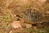 Zelve/Tortoise