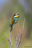 Birds/Ptice
