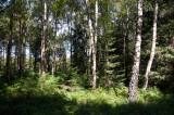 Deutsch Belgischer Naturpark Hohes Venn