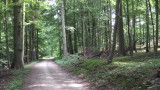 Brüsseler Wald
