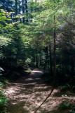 Trail-of-Shadow.jpg