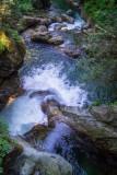 Lynn Canyon & Rice Lake