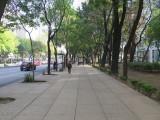 Mexico City paseo de la reforma