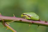 Reptiles/Amphibians - Reptielen/Amfibieen