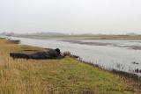 Utopia, Texel 2013