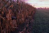 In the field - In het veld