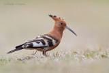 Birds South Africa - Vogels Zuid Afrika