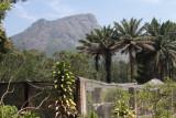 The Exotic Garden