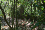 An old graveyard high in the hills in Ranomafana NP