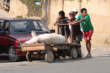 Pig going to or from market in Fianarantsoa
