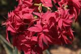 Flowering shrub at Anja
