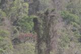 The Madagascar Fish Eagle nest at Ampijoroa Forest Station