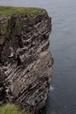 The sea cliffs on Handa Island