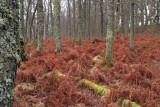 Shore Wood, RSPB Loch Lomond