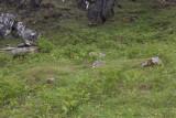 The graves at Kiloran Bay